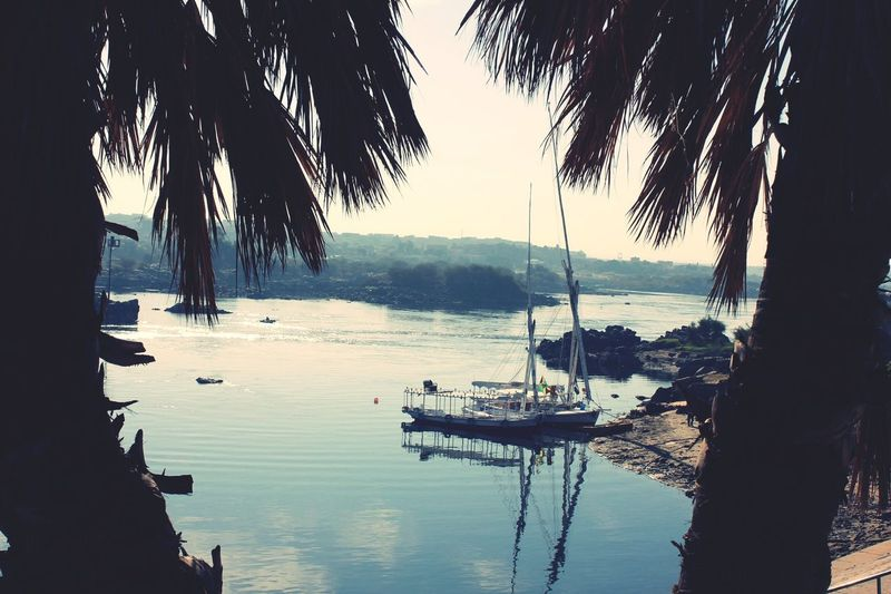 EyeEmNewHere River Nile Water Palm Tree Nature Beauty In Nature No People Aswan Egypt Sailboat