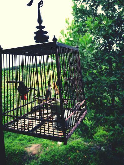 นกน้อย First Eyeem Photo