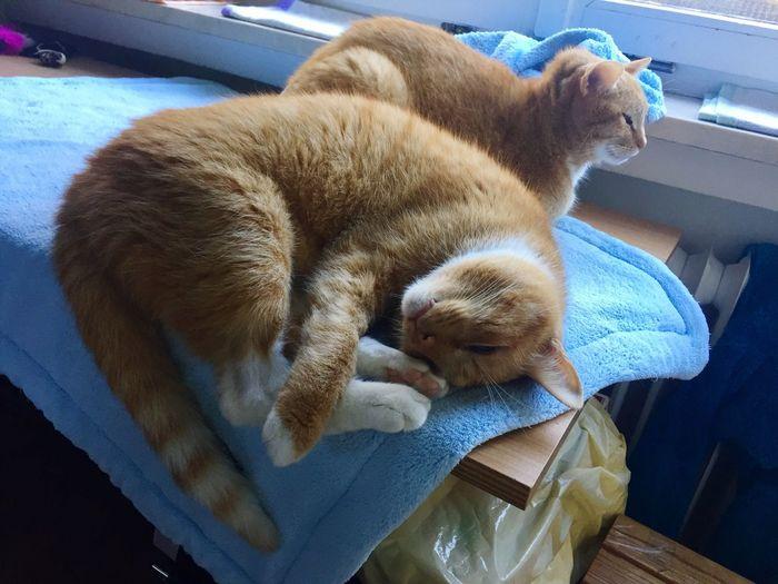 Katzen 💜 Cats 🐱 Favouriteanimal Katzenfotografie Simply Life Two Cats