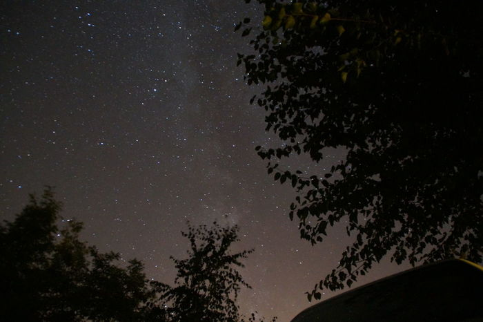 Tree Low Angle View Night Star - Space Sky Star Field Astronomy Beauty In Nature Space Infinity Star Galaxy