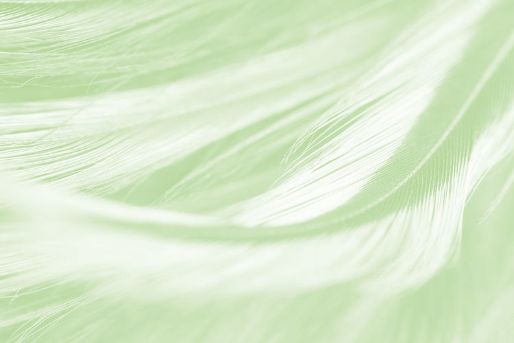 Close-up Selective Focus Green Color Plant Backgrounds Nature Freshness Leaf No People Plant Part Full Frame White Color Extreme Close-up Beauty In Nature Food And Drink Food Vulnerability  Fragility Softness Wellbeing Flower