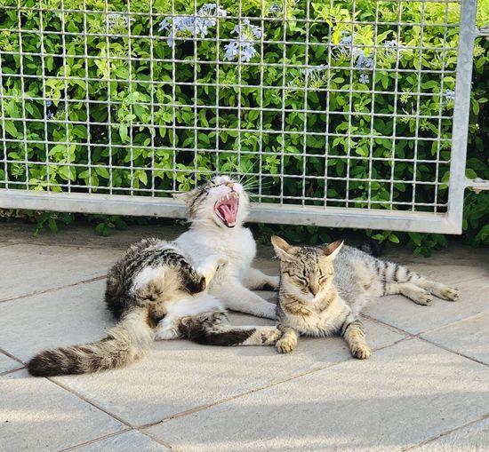 Cat lying on footpath