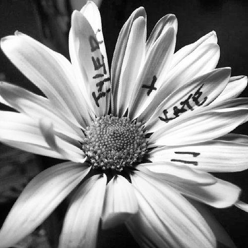 Daisiesnpinkyswears Daisy Pinkyswears Blackandwhite blacknwhite tk petals daisies shadow tyler katlynn kat love interraciallove interracialcouple interracial