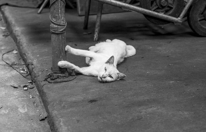 Chinatown | Bangkok Bangkok Car Cat Chinatown Chinatown Bangkok Street Photography Streetlife Thailand Vintage
