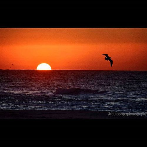Helllo, beautiful. 10.14.15 AspiringPhotographer Nikonphotography Nikon Nikontop Nikonshooter Nikon_photography_ Nikon_shots Sunrise Sun Beach Waves Gilgobeach Longisland Instagood Beautiful Nature Happybirthdayjimi