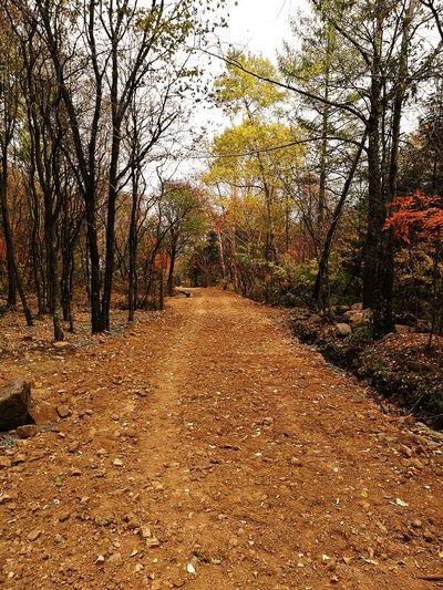 长白之秋。。Tree Day Nature No People Outdoors The Way Forward Growth Tranquility Sky Beauty In Nature