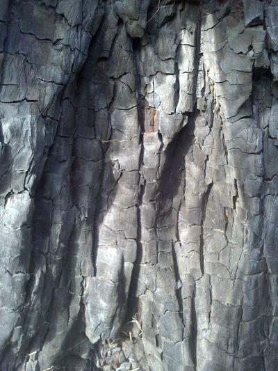Texture, Black, Tree, Fire, Burnt,