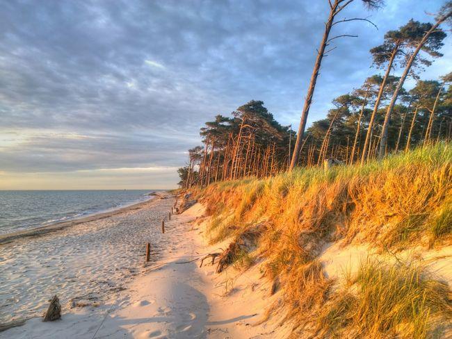 Sonnenuntergang am Weststrand auf dem Darß Windflüchter Strand Beach