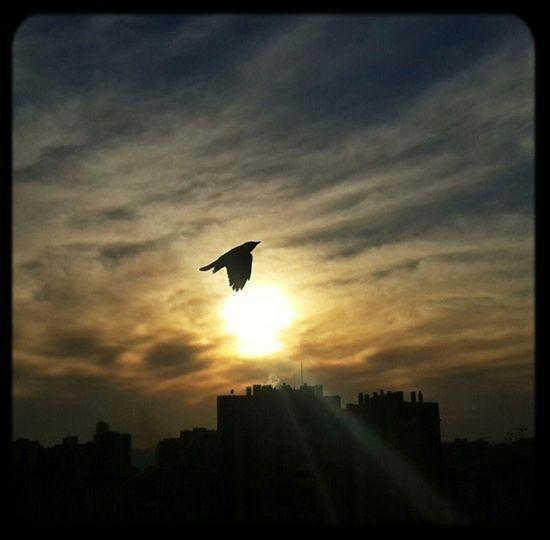 Bird & Sunset First Eyeem Photo