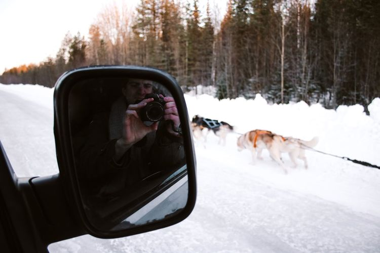 Reflection of a dog on car