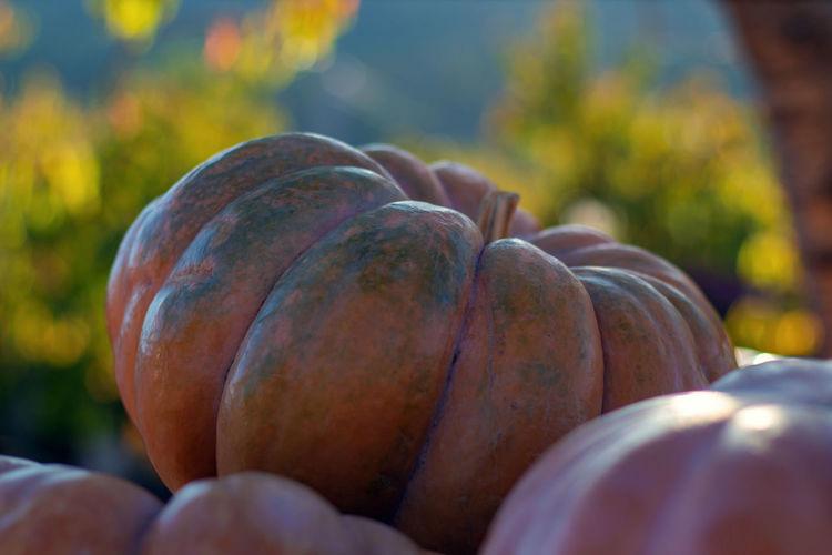 Close-up of pumpkins in market