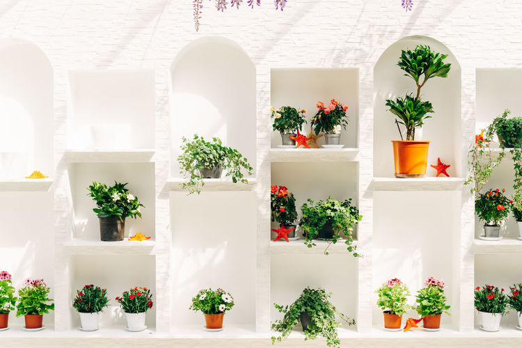 Potted plants on table against white wall