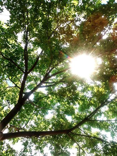 Transparencia Lindatardehermosuras Sun Deslumbrante