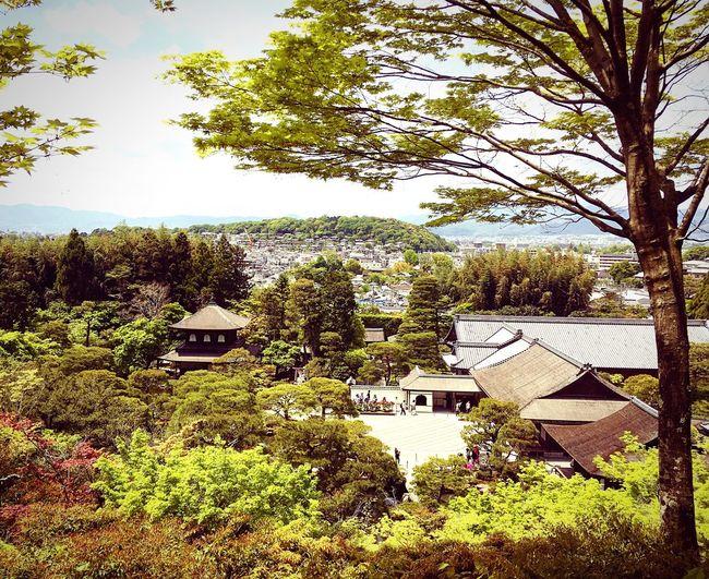 銀閣寺 慈照寺 京都 Kyoto Kyoto, Japan Beauty In Nature Kyoto Garden Japanese Garden 3XSPUnity Enjoying Life Travel Destinations Hello World Relaxing