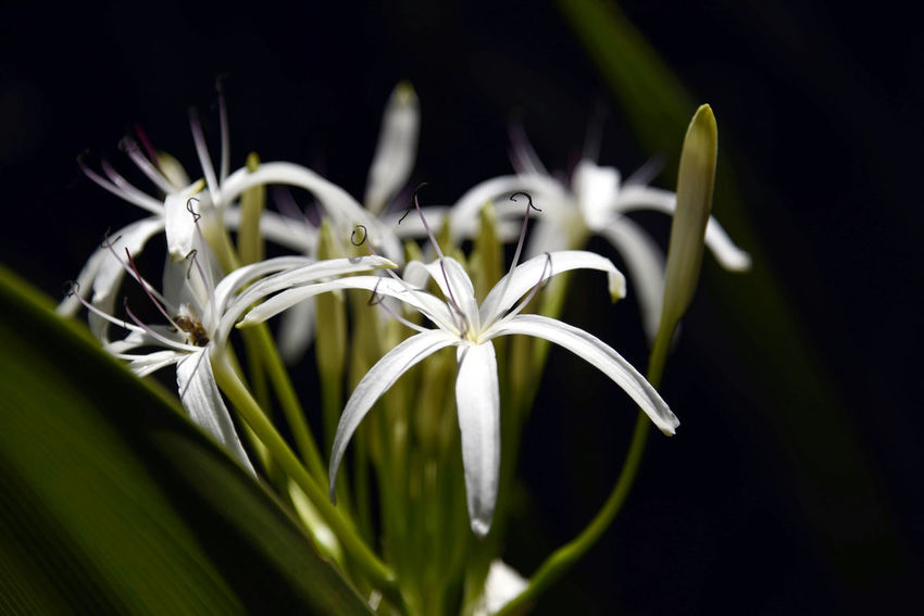Flower power Black Background Flower Close-up Beauty In Nature Flower Head Nature Taking Photos Enjoying Life Relaxing