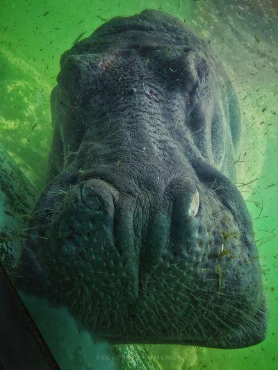 Water Animal