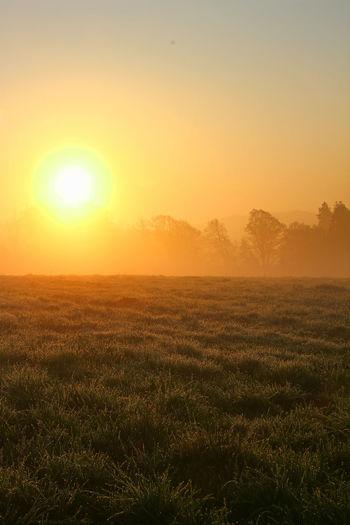 Glossy meadow