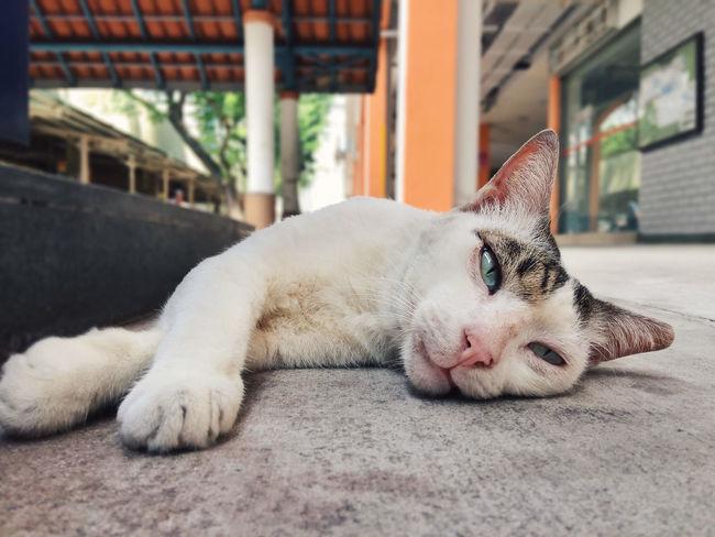 catzZzzzz zzz... Awake Cat Close-up Lazy Lying Down Monday Blues One Animal Relaxation Sleep Sleeping Sleeping Cat Sleepy Stray Cat The Week On EyeEm