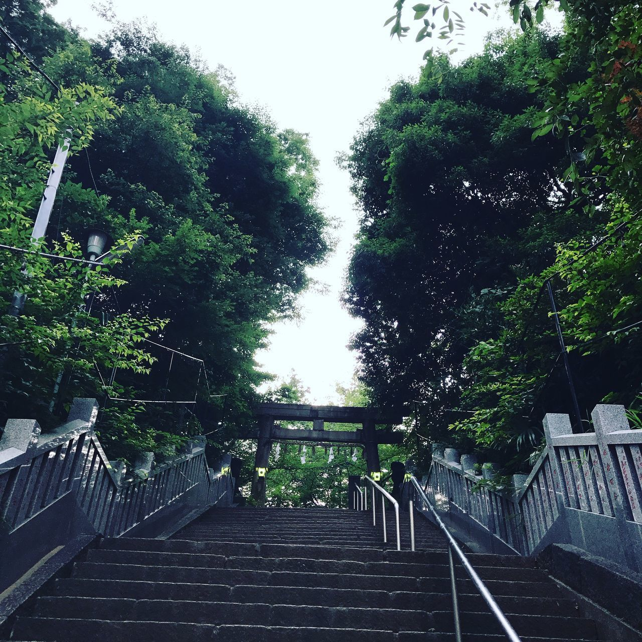 LOW ANGLE VIEW OF STEPS AMIDST TREES AND PLANTS