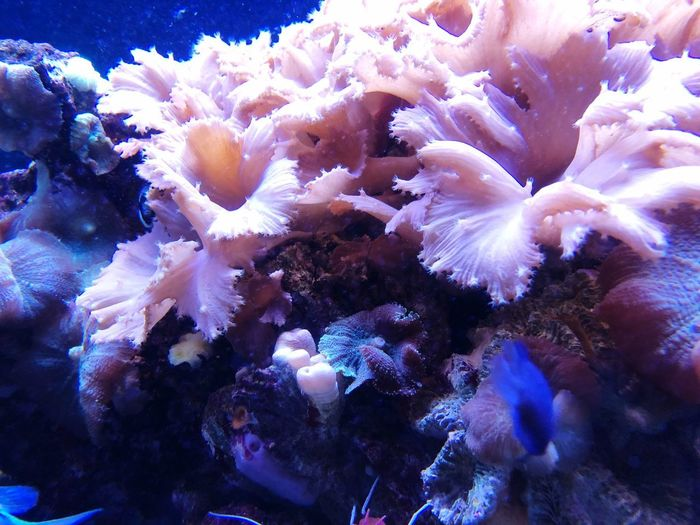 Underwater Sea UnderSea Coral Water Sea Life Beauty In Nature Backgrounds Marine Close-up Ecosystem  Full Frame