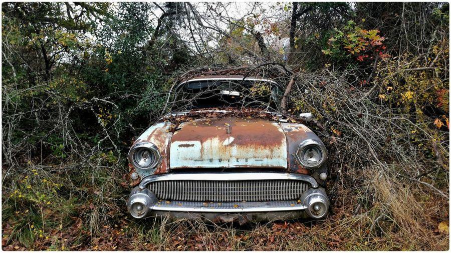 Half a Century Rust Abandonedporn Carcass Rustedsteel American Steel Buick BuickCentury Phonetography Phone Photography SNAPp Open Edit