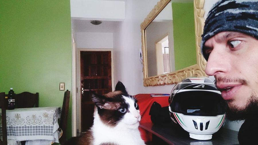Cat My Cat! Cute Pets olha a cara do safado marcando o bote