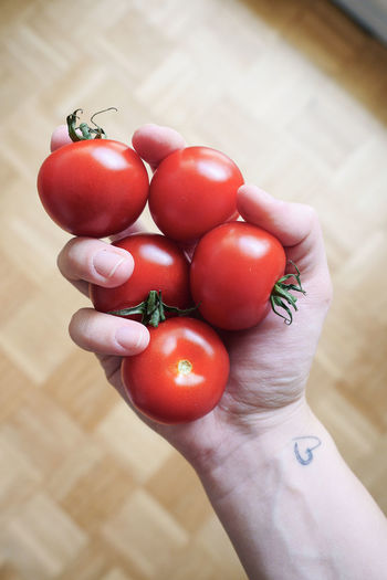 High angle view of person holding tomatoes