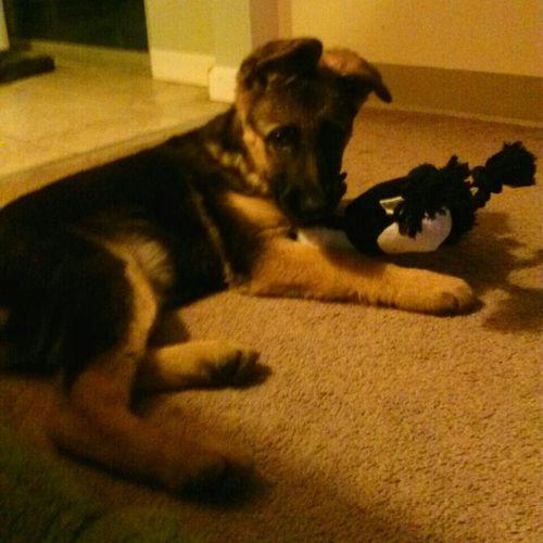 My Dog. I Love Her.(: