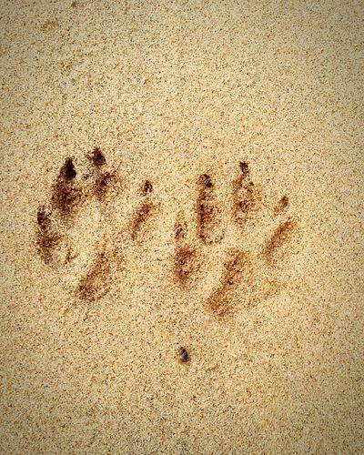 Paw Prints Animal Sand Beach
