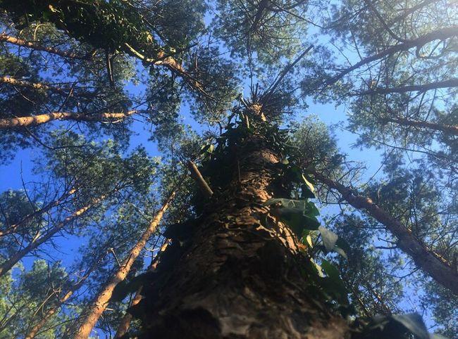Sunday Morning Walk Morningwalk Nature Tree Treeart Nature Photography Hobbyphotographer Naturelovers Good Morning EyeEm Photography
