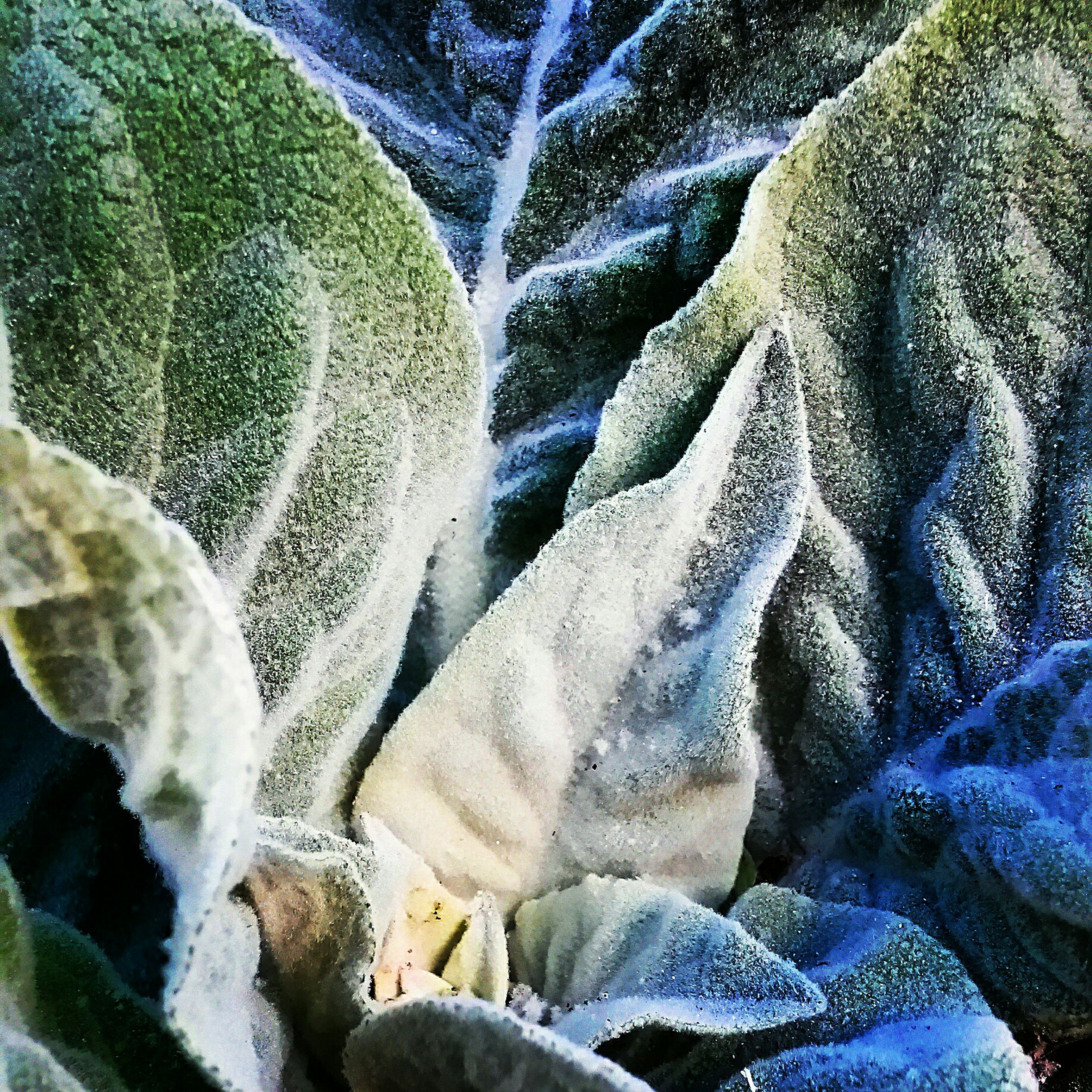 nature, beauty in nature, growth, close-up, winter, full frame, cold temperature, snow, plant, natural pattern, high angle view, backgrounds, tranquility, outdoors, day, freshness, no people, season, white color, leaf