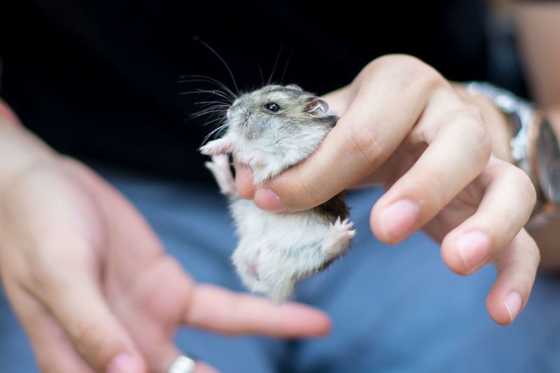 Animal Wildlife Care Close-up Domestic Finger Focus On Foreground Hand Holding Human Body Part Human Hand Human Limb Mammal Midsection One Animal One Person Pet Owner Pets Real People Rodent Selective Focus Vertebrate
