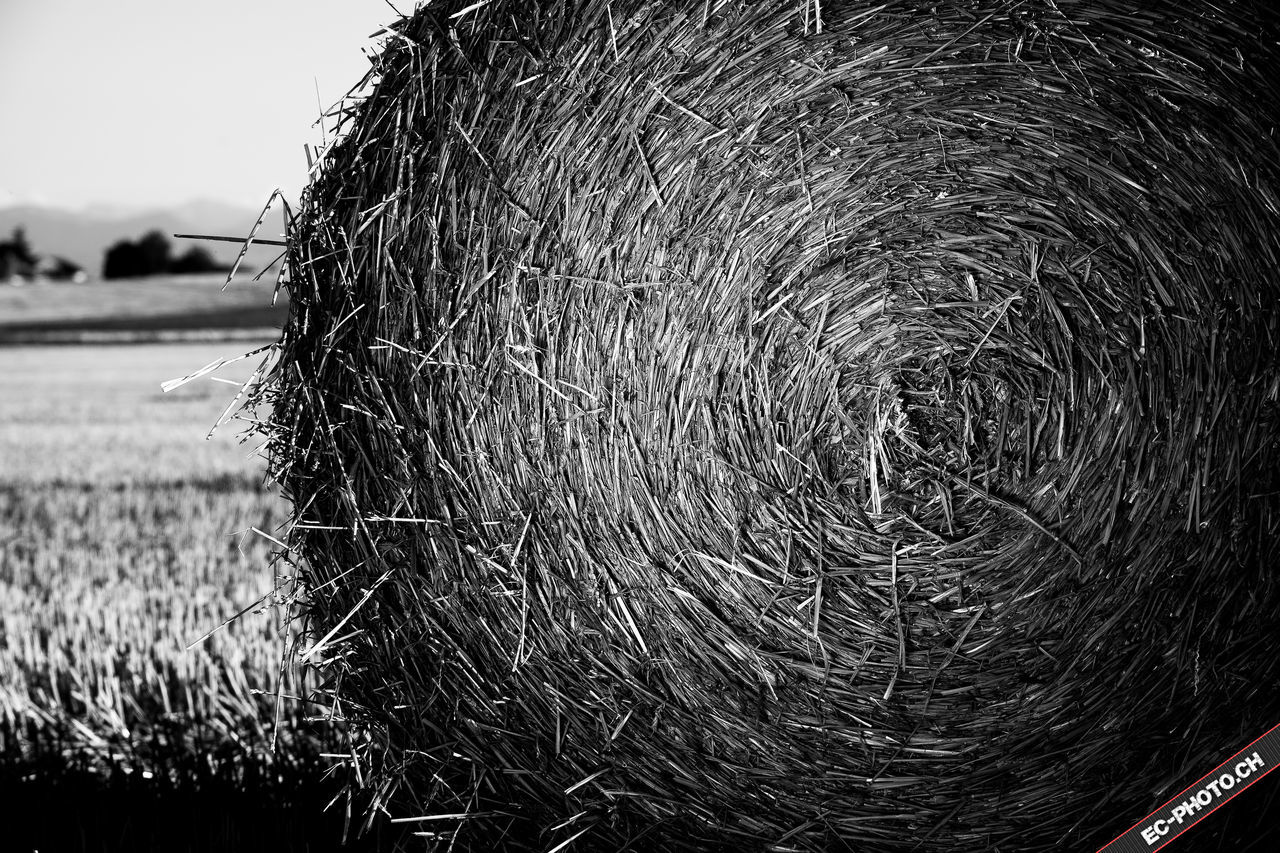 field, agriculture, focus on foreground, outdoors, day, no people, close-up, nature, animal themes, mammal