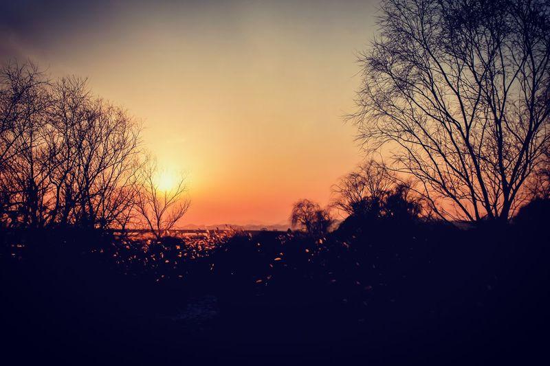 달성습지 Sunset No People Beauty In Nature