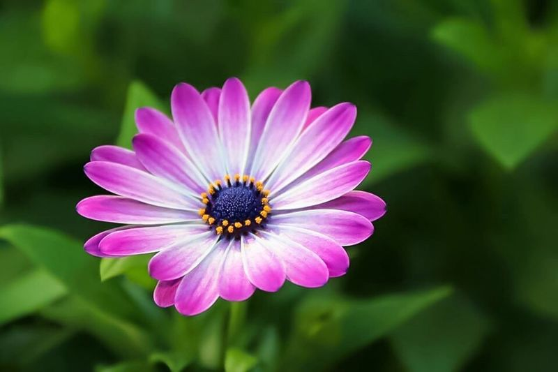 The Flower Flower Freshness Petal Close-up Single Flower Beauty In Nature Nature Purple In Bloom