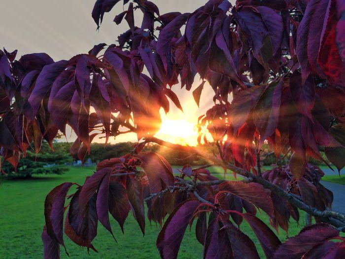 SunsetSunset_collectionSkySkyporn[a:AutumnbAutumn ColorstAutumn Leaveseaves 🍁