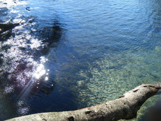 Water Branch Branch In Water Tree Clear Water Glisten Sun Glistening Sunspot Shining