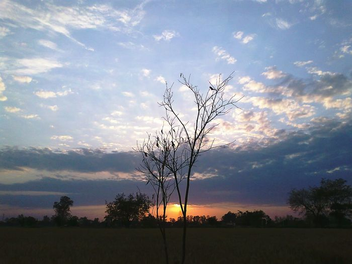 EyeEmNewHere ClickedWith5MegaPixel Sunset Nature Sky Grass No People Tree Outdoors Beauty In Nature Galaxy Day