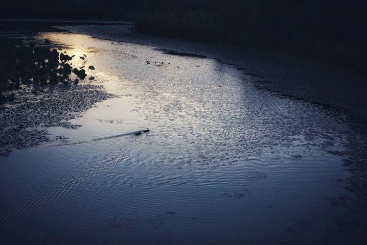 집으로.. . . #하루한컷 #물의정원 #천둥오리 #강 #노을 #5DMARK4 #신쩜팔 #EF50MMF18MMSTM Water Sunset Sea Bird Reflection Silhouette Beach Sky Animal Themes