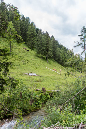 Calm Clouds Cows Landscape Liechtenstein Mountainous Mountains Tranquility Village