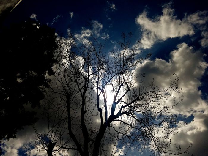 Contrast in nature Dead Tree Partly Cloudy Contrast Colorful Looking Up Looking Up At The Sky Looking Up Through The Trees Sun Trying To Break Through The Clouds After The Rain Death And Life Juxtaposition Surreal Pixelated Close-up Cloudscape California Dreamin
