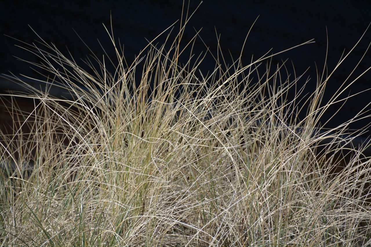 no people, tranquility, nature, growth, outdoors, night, grass, beauty in nature, plant, scenics, close-up