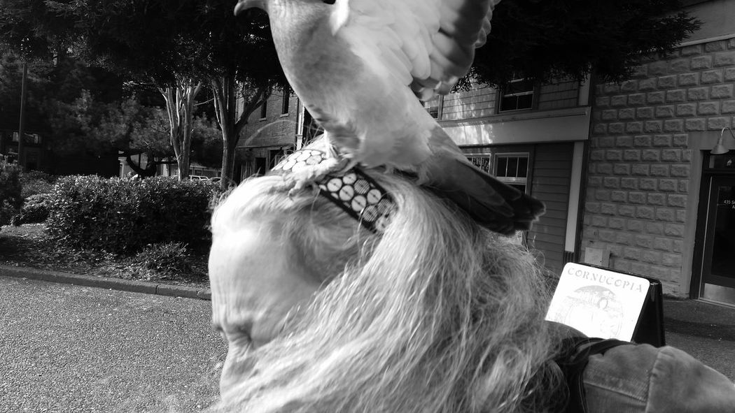 A pidgeon landed on my mom's head when we were feeding the birds. Pidgeons City Life Capturing Movement Capture The Moment Fowl Outdoors Showcase: February Black And White Memories