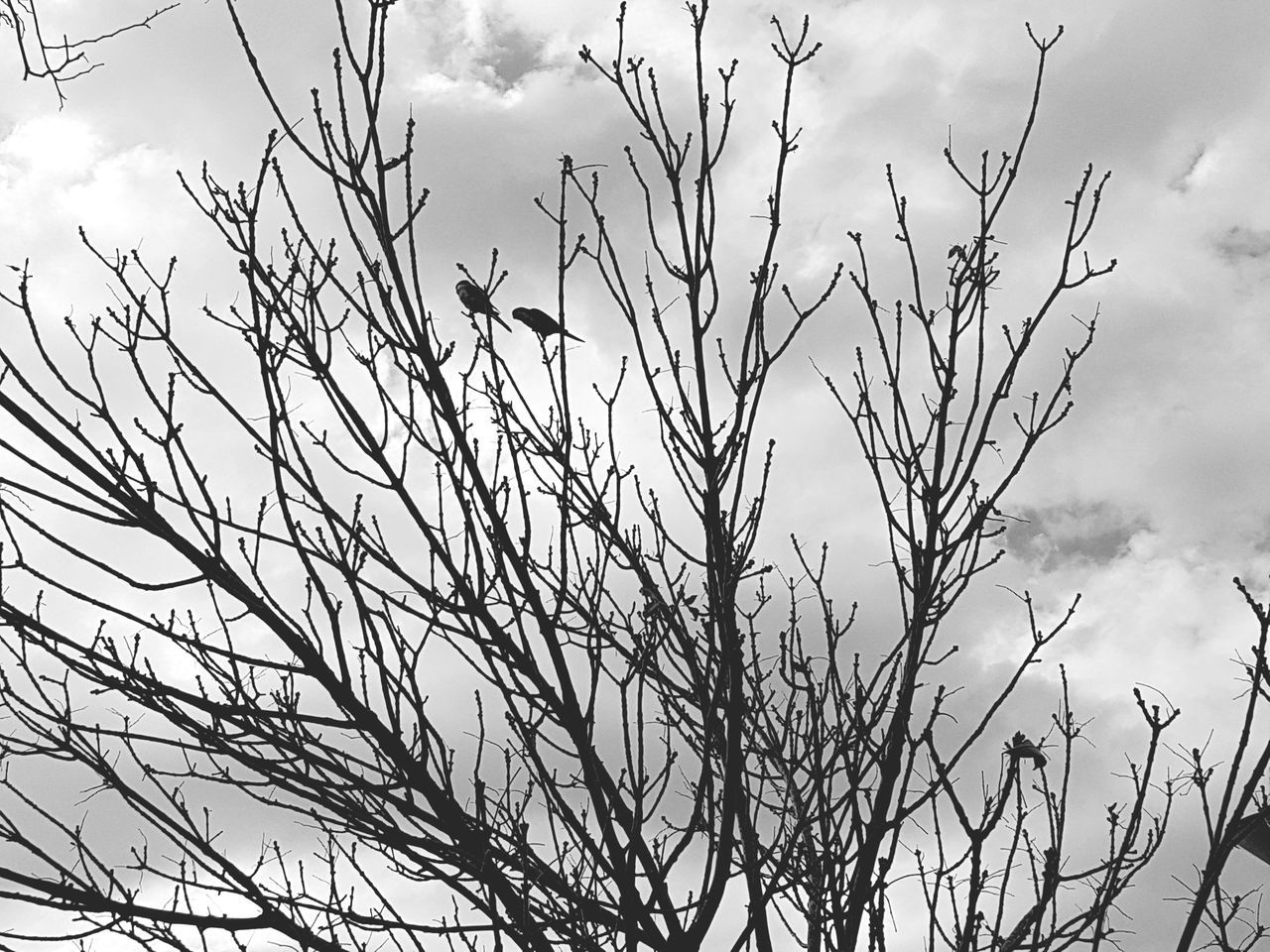 sky, cloud - sky, nature, low angle view, outdoors, no people, day, growth, bird, bare tree, beauty in nature, animal themes, animals in the wild, branch