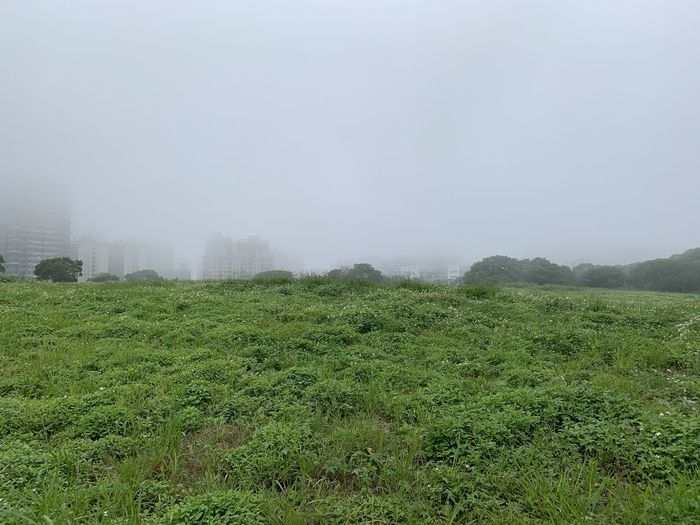 Fog Plant Green Color Land Grass Tranquility Beauty In Nature Landscape Tranquil Scene Field Environment Nature Growth Sky Scenics - Nature Day No People Tree Outdoors