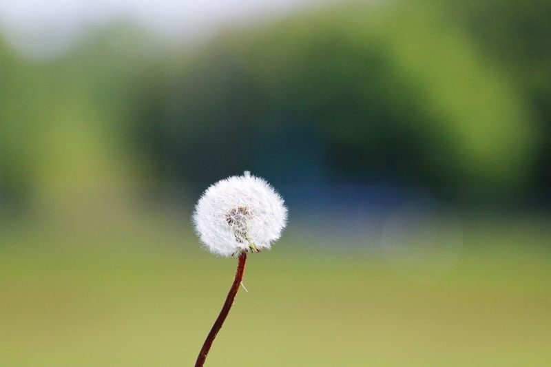 Close-up Plant Focus On Foreground Beauty In Nature Flower Growth Nature Freshness Day Flowering Plant No People Outdoors Plant Stem Softness White Color