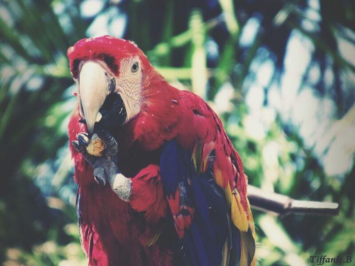 Oiseaux Peroquet Rouge Bleu Zoo Animal Photography