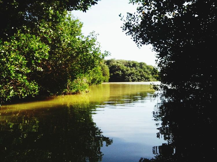 Celestun Laguna Green