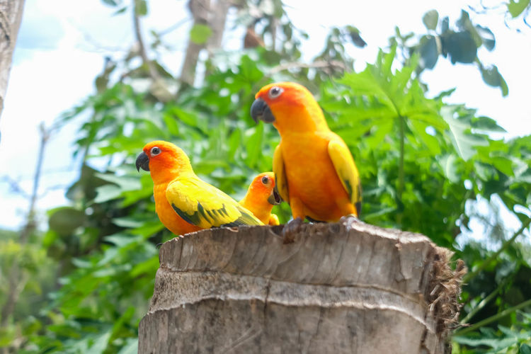 View of parrot perching on tree