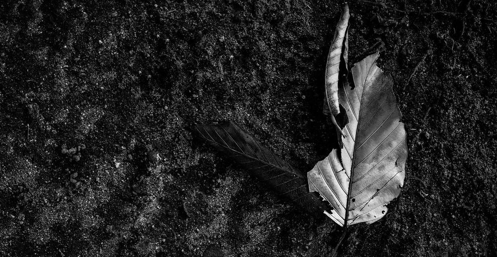 Dry leaves on the floor. No People Animal Animal Themes Nature Close-up Day Tree Plant Leaf Outdoors High Angle View Monochrome Dry Abstract